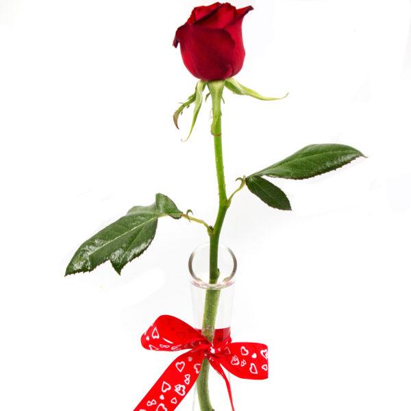 Single Red Rose in Vase